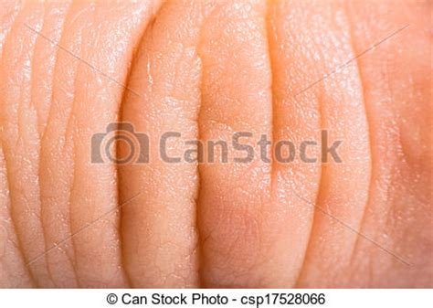 human skin macro picture stock photo 169 jugulator 25119063 stock image of up human skin macro epidermis texture csp17528066 search stock