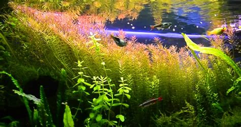led aquarium lighting planted tank best led lights for planted tank 2018 reviews guide
