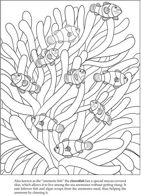 coloring page of clown fish color it clown fish animals coloring pages pinterest