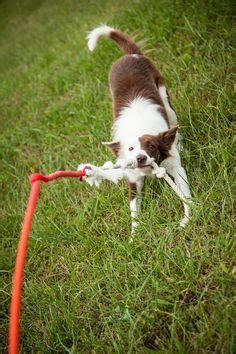 backyard toys for dogs 1000 images about dogs on popsicles for
