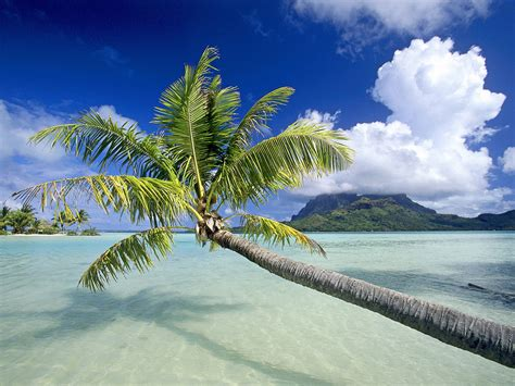 tropical island paradise world visits tropical island beach wallpaper free review