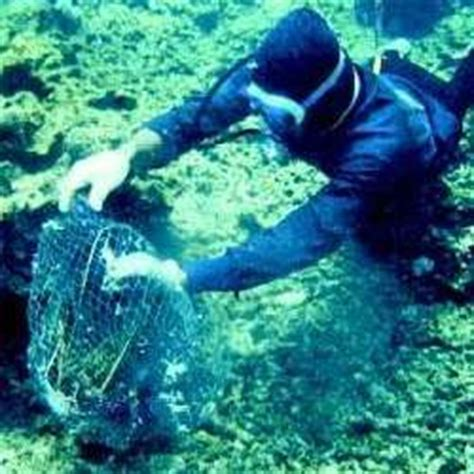 Marine Biologist Description And Salary by 17 Best Ideas About Marine Biologist Salary On Marine Biology Careers What Is