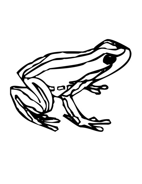 coloring page poison dart frog rainforest poison dart frog coloring page coloring pages