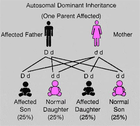 types of inheritance in with diagram ilmydhila anezar
