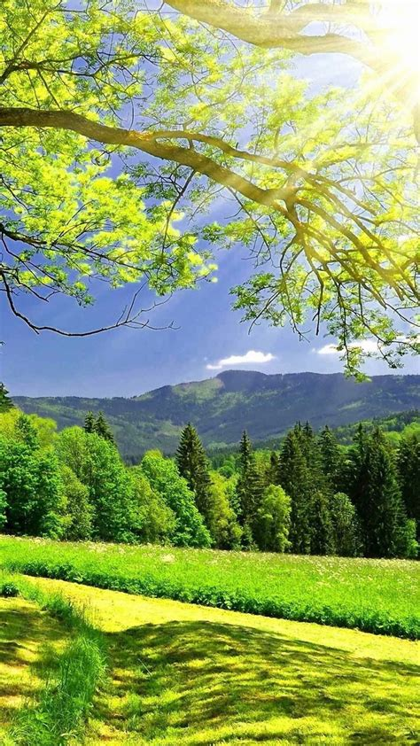 nature wallpaper android phone hd 720x1280 bright green nature htc desire wallpaper hd mobile