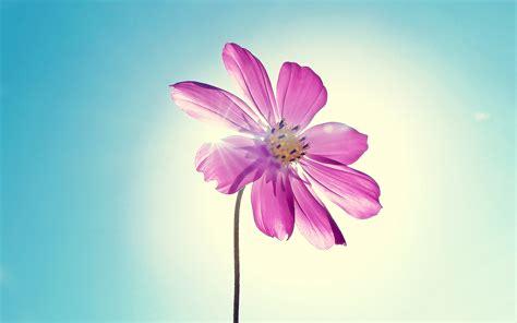 beautiful spring flowers beautiful spring flowers wallpaper high definition