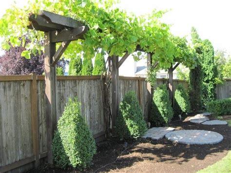 backyard grape vine grape vine fence arbor pergola timbers fences edging