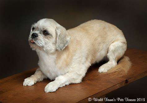can you freeze dogs image gallery taxidermy