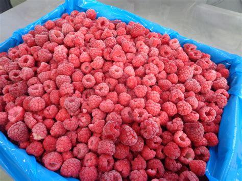 Iqf Frozen Raspberry 1kg congeladora anahuac iqf whole raspberries