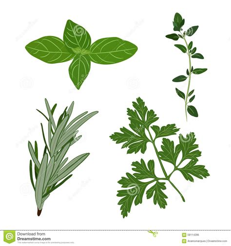 herbe aromatique cuisine dirigez le persil le thym le romarin et les herbes