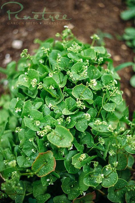 Pinetree Garden Seeds pinetree garden seeds www superseeds pinetree garden