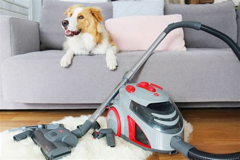 review hoover dog  cat vacuum   budget