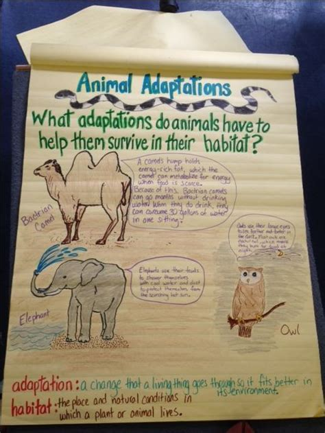 3rd grade science animal adaptations science