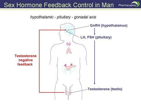 estrogen hormone effect on men aspartame not so sweet