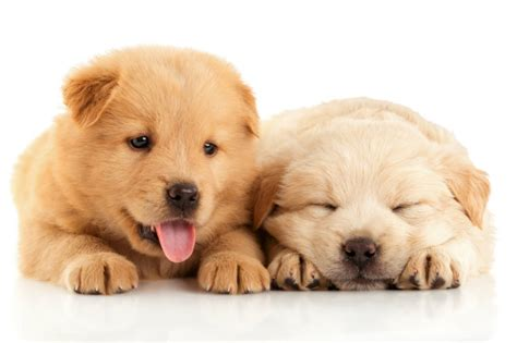 what to buy for a puppy where to find the best dogs for sale