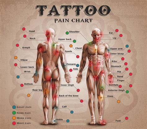 tattoo pain o meter 25 best ideas about tattoos on pinterest tattoo ideas