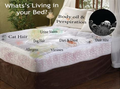 how to clean a couch with bed bugs mattress cleaning chemdry carpet tech