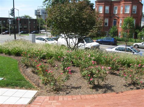 e landscape specialty solutions llc landscaping at the