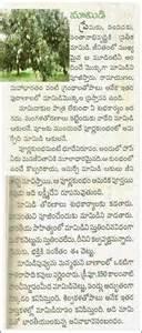 Neem Tree Essay by Telugu Pandagalu Devullu ప డగల మర య ద వ ల ల