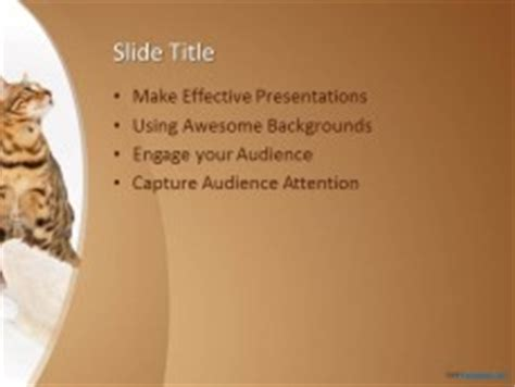 cat powerpoint template free cat bed ppt template