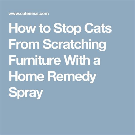 How To Stop Cat From Scratching by 17 Best Images About For The Home On Ladder
