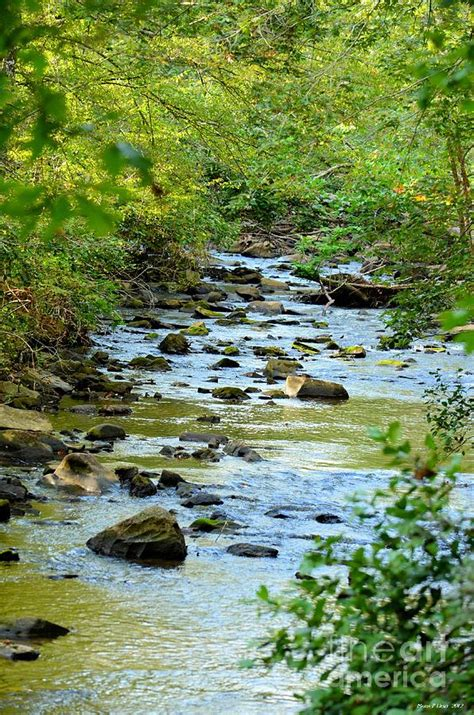 creek bed rock creek bed photograph by maria urso