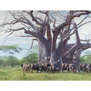 among sws and giants in equatorial africa an account of surveys and adventures in the southern sudan and east africa classic reprint books a among giants elephants around baobab tree by