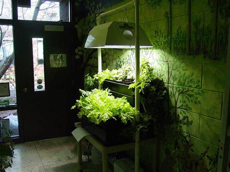 hydroponics  beginners hydroponics blog hydroponics