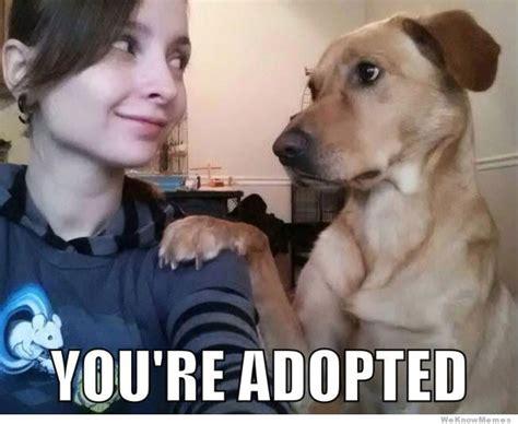 Best Dog Memes - best of the brutally honest dog meme weknowmemes