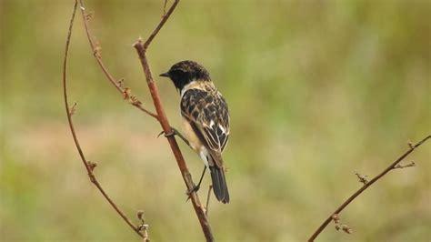 nesting habits of birds youtube
