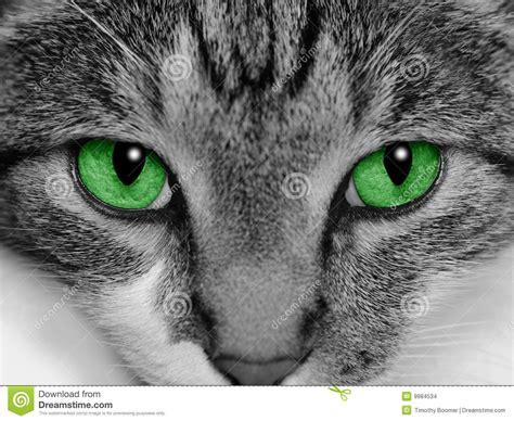 imagenes de ojos verdes de gatos gato de ojos verdes imagenes de archivo imagen 9984534
