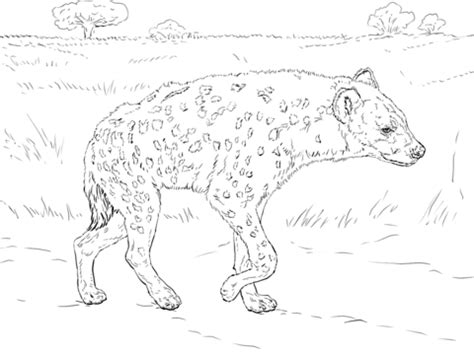 baby hyena coloring page spotted hyena walking in the savannah coloring page free