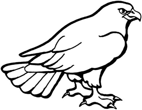 Hawk Coloring Pages hawk 3 coloring page supercoloring