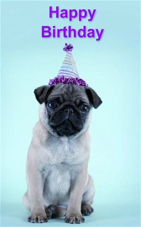 birthday pugs pug birthday card from your friends at in home quot k9katelynn