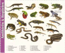 reptile awareness day deltiolog