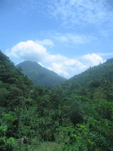 Blue Mountain Jamaican jamaica and the blue mountain peak