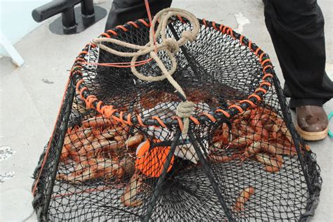 shrimp boat excursions alaska cruise shrimping crabbing catch fresh seafood