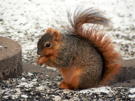 hair loss in squirrels the miss melody squirrel crazy cat nerd