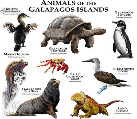 7 Amazing Animals From The Galapagos Islands by Photo
