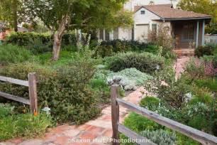 california bungalow drought resistant garden entering front yard california native plant