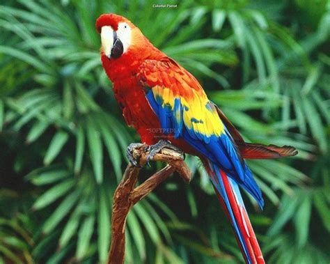 pictures top ten beautiful birds top 10 parrot wallpaper