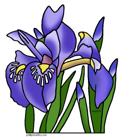 Tennessee State Flower by Tennessee State Flower Iris Clipart Panda Free