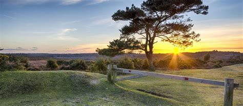 Pets Barn Campsites In The New Forest Best Camping In The New Forest