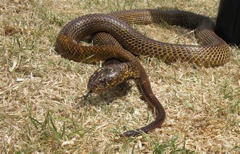 apartir de cuando se cobra lo 3000 del desempleo intenta que no te muerda una serpiente venenosa a partir