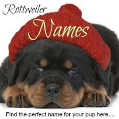 rottweiler growth chart pictures best 25 rottweiler puppies ideas on puppy breeds rottweiler and