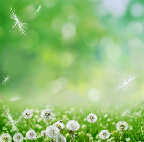 imagenes bonitas gratis para fondo de pantalla fotos de flores hermosas para fondo de pantalla