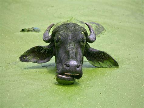imagenes muy increibles imagenes muy buenas de animales increibles im 225 genes