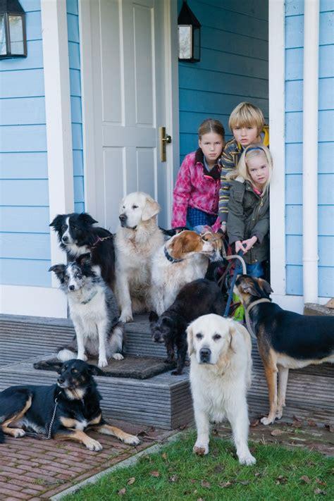 puppy patrol puppy patrol tv series