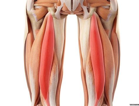hamstring muscles diagram liverpool s hamstring problem and how to fix it