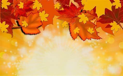 autumn fall background  image  pixabay